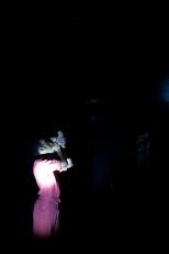 Yermedea RAW (2012)